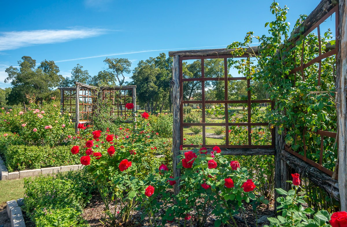 Stroll the Farmer's Branch rose gardens