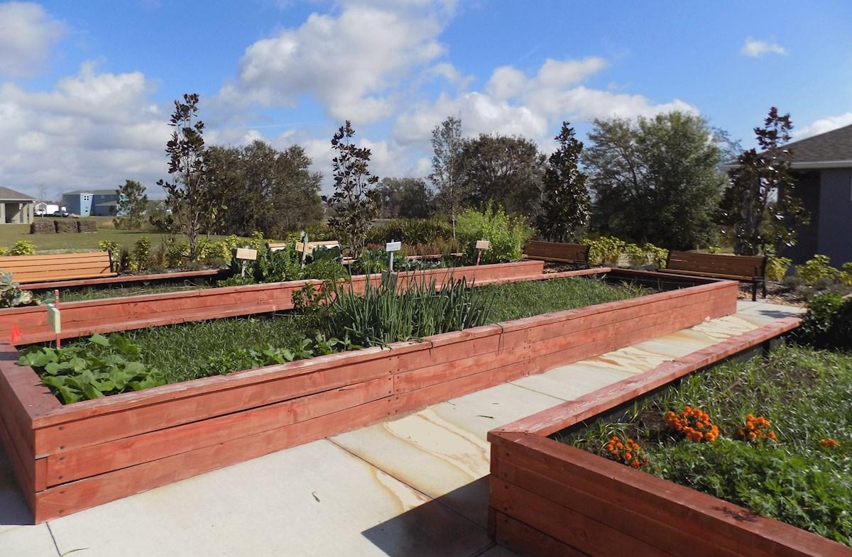 growing vegetables in community garden